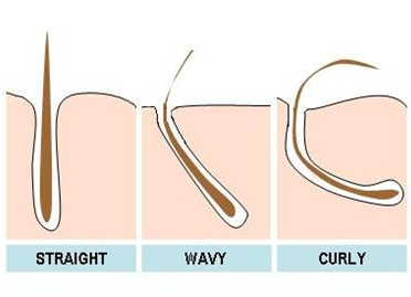 Diff. types of hairfollicles