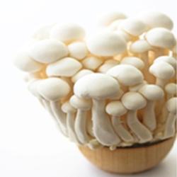 White Mushroom For DHT